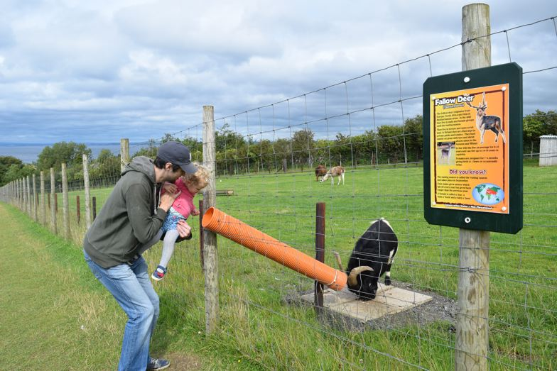heads of ayr farm park feeding goats
