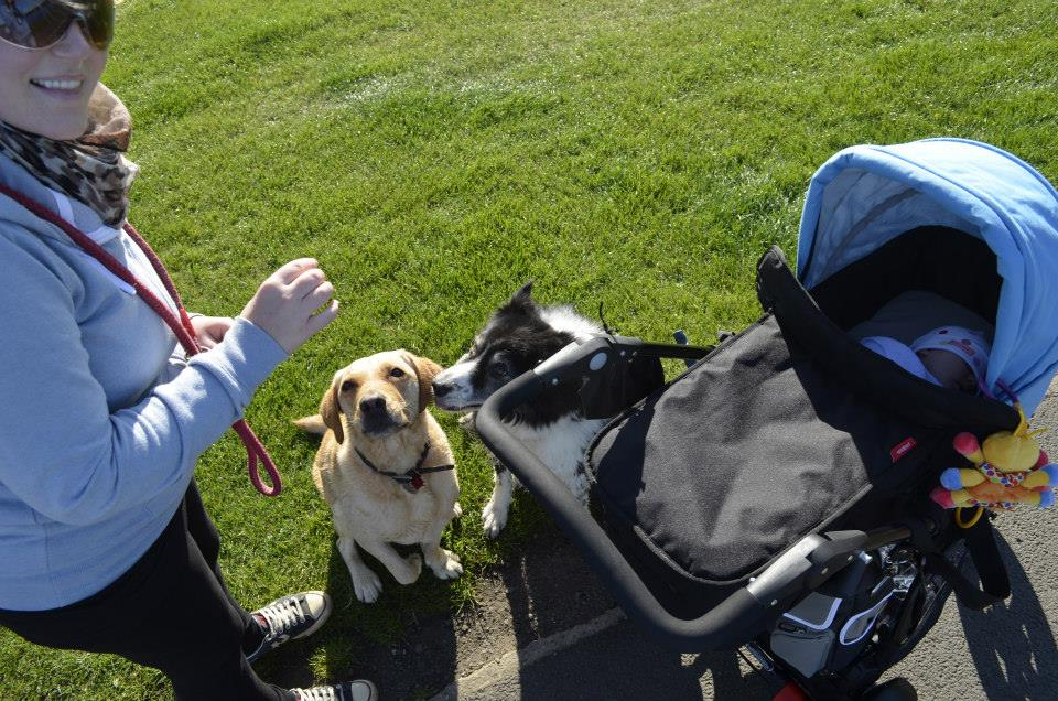 walks-in-the-park-with-baby-and-dogs