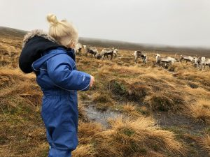 Visiting The Cairngorm Reindeer Herd