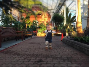 winter-gardens-glasgow-peoples-palace-review