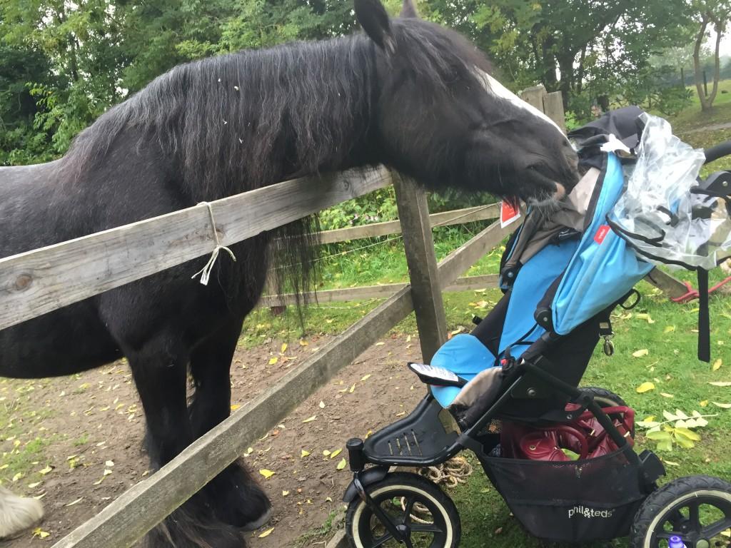 pollok-park-horses