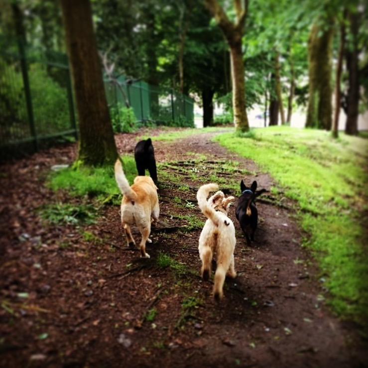 dogs-in-the-park-glasgow