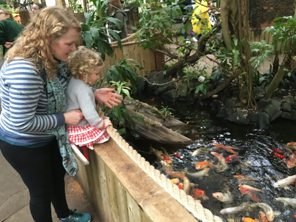 amazonia-with-a-toddler