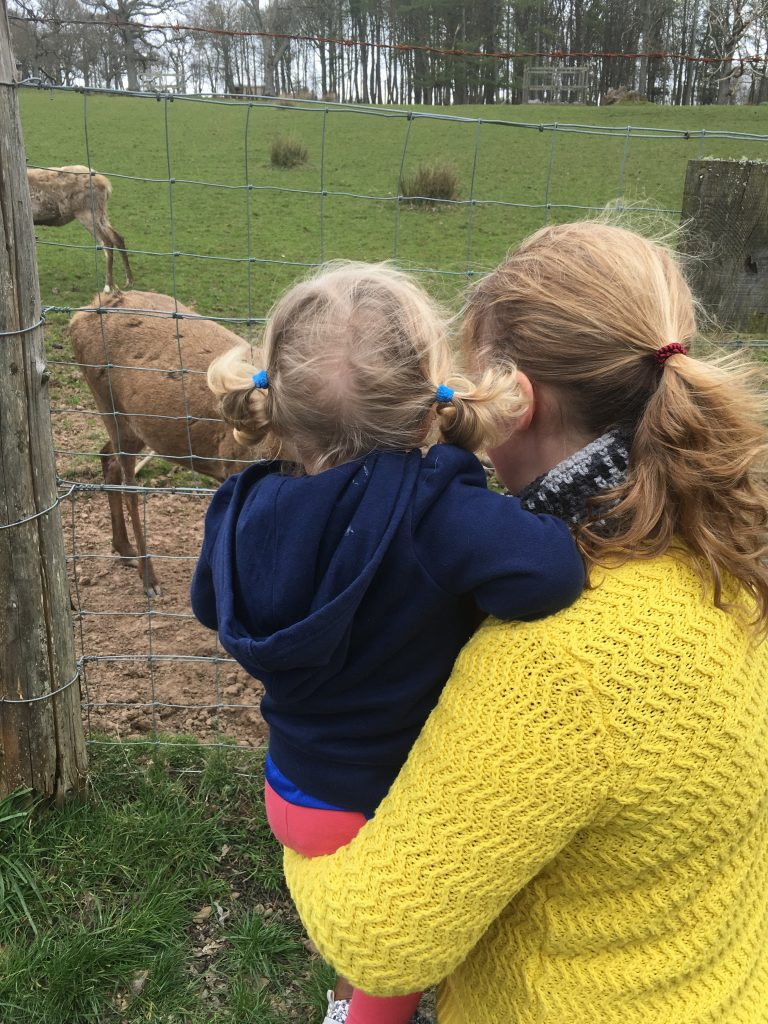 culzean-castle-deer-watching-with-toddler