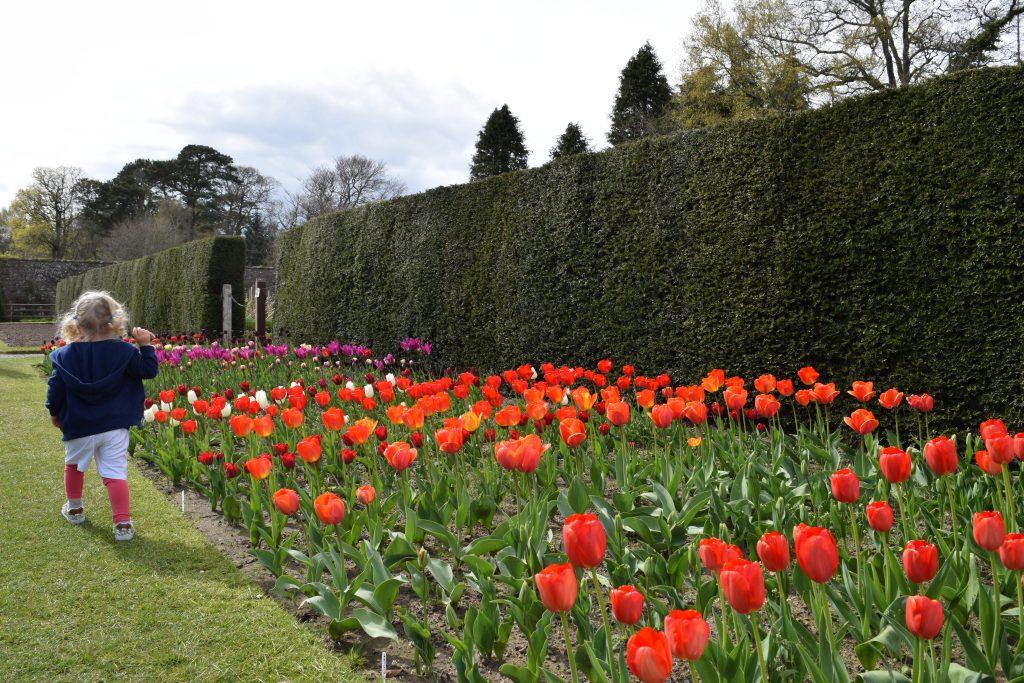 culzean-castle-flowers