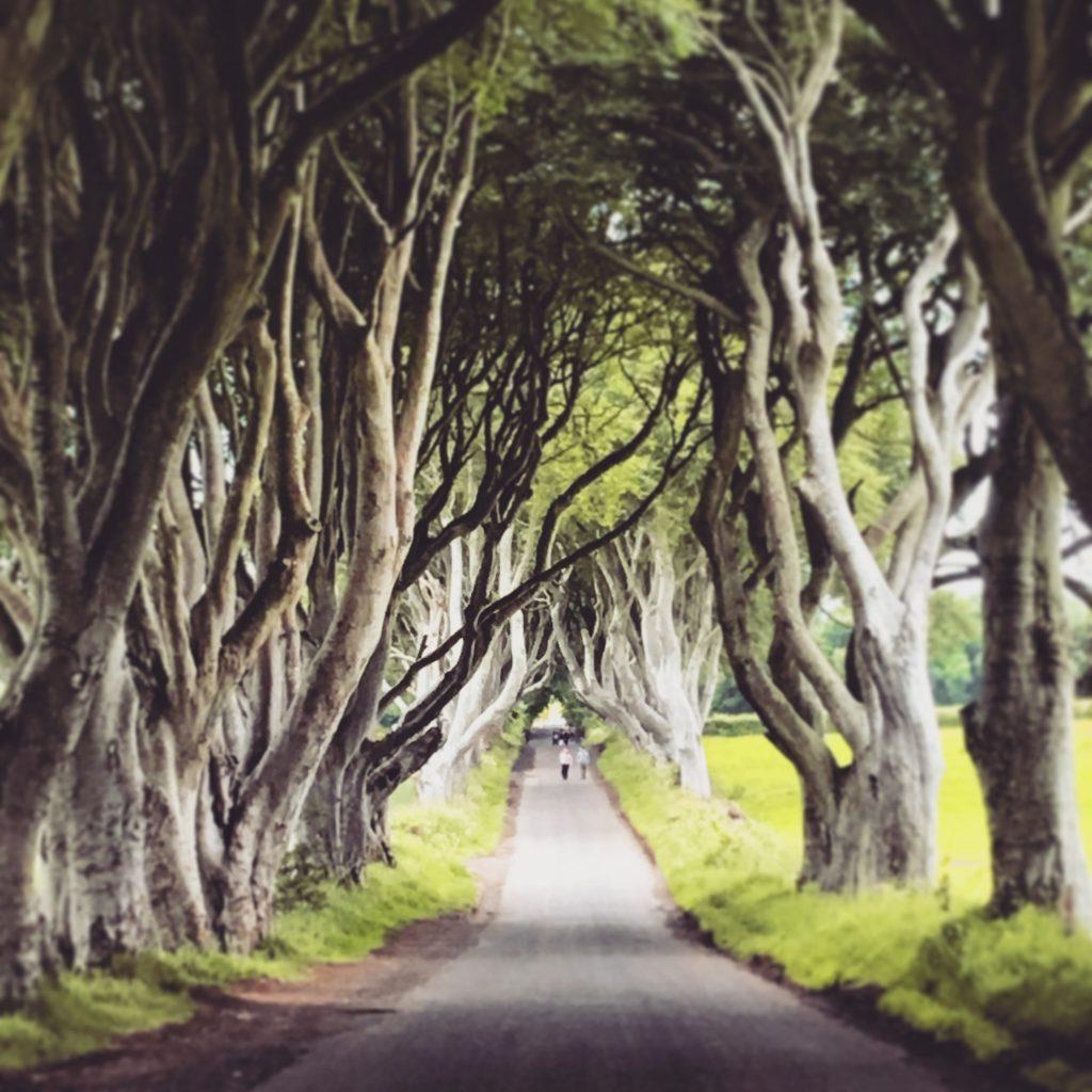 babymoon-causeway-coast-the-dark-hedges